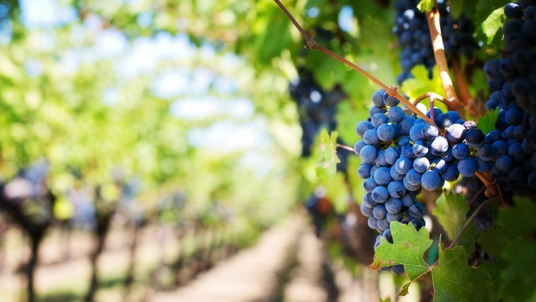 The 4 functions in the parable of the vine